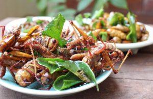 entomophagie