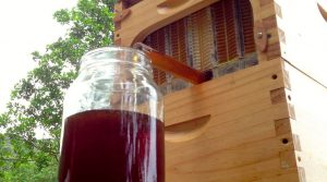récolter du miel